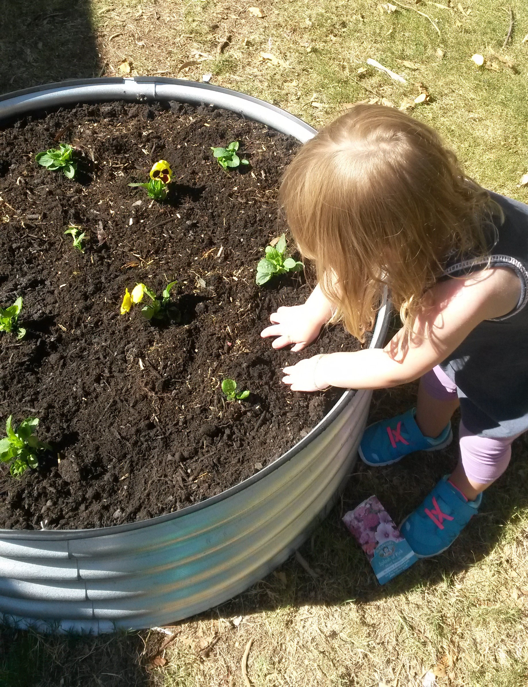 Kids in the garden! | A Kailyard in Adelaide!